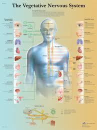nervous system as vegetable